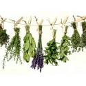 Przyprawy różne i zioła