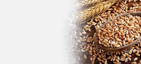 Produkty z pszenicy